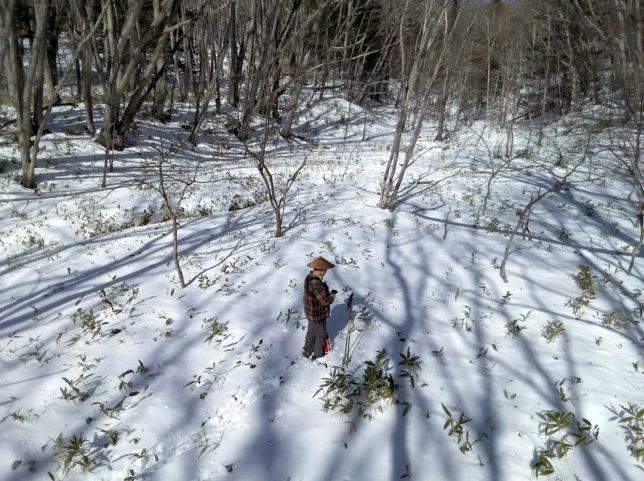 薮が多い中、滑れそうな斜面を探します