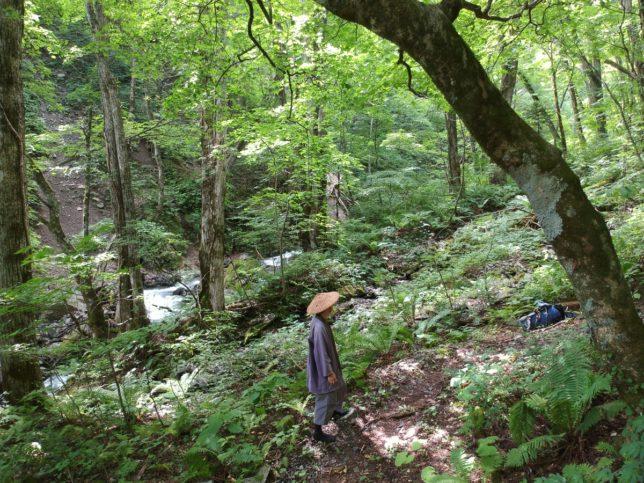 南沢沿いの登山道は涼しいです