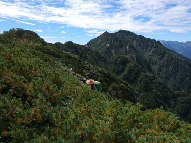 霞沢岳への稜線はゲキ藪でした