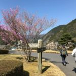 2020年4月4日 棒ノ折山へ